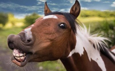 Never Say Neigh: FDA Lists 'Horse Drug' As Approved COVID Treatment